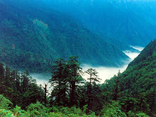 НЕОБЫЧНЫЕ ЯВЛЕНИЯ: в долине чёрного бамбука