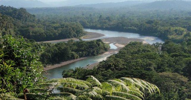 ДЖУНГЛИ: амазонии важны для всей планеты
