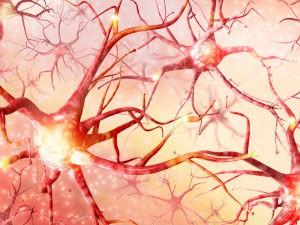 НЕЙРОНЫ: зеркальные нейроны, что это?