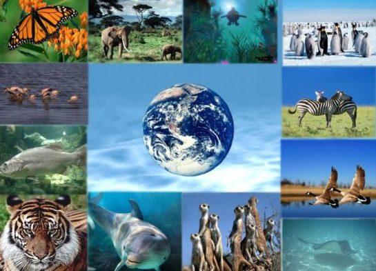 РОСТ НАСЕЛЕНИЯ: проблема для планеты
