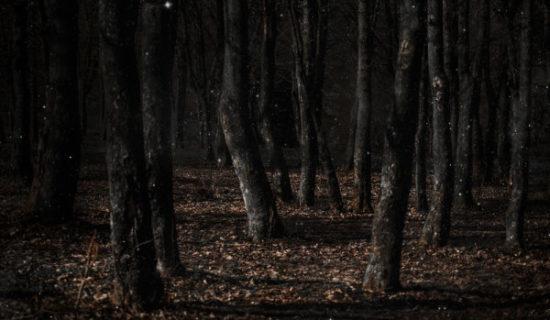 ЛЕС ПРИЗРАКОВ: мрачное место в Японии