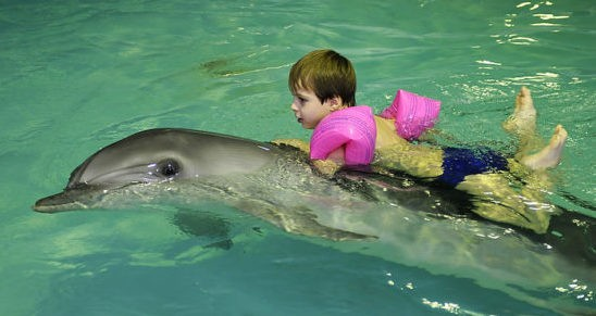 дельфин извозчик