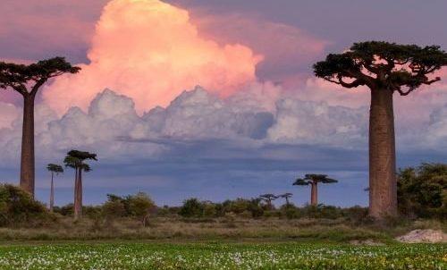 МАДАГАСКАР: удивительный остров