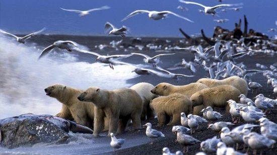 ГЛОБАЛЬНОЕ ПОТЕПЛЕНИЕ: тысячи видов животных мигрируют к полюсам