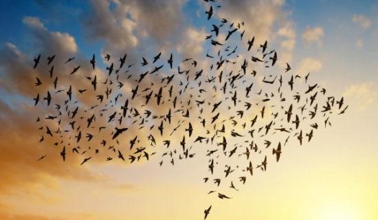 ФЕНОМЕН: летящая стрела
