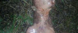 АМЕРИКАНКА: показала погибшего пришельца у себя во дворе