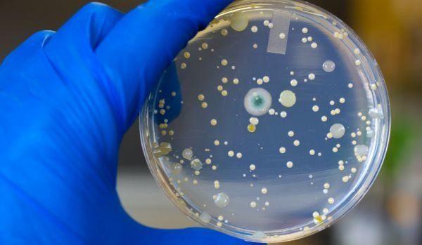 Бактерия с Витоши