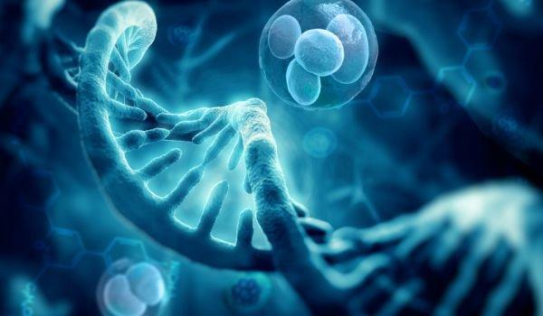 Сотворение и ДНК